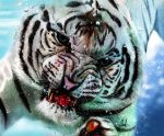 White Tiger in The Water by MuhammedFeyyaz