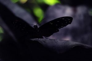 Butterfly in the Shadows by MyReasonInLife