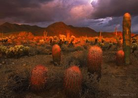 Sonoran glow by PeterJCoskun