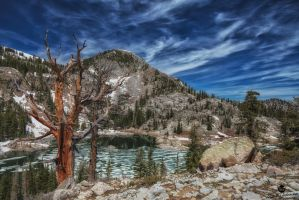 The Old Tree and Lake Mary by mjohanson