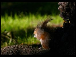 A Clandestine Squirrel by IrishRaine