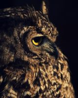 The mighty eagle owl by Vapui
