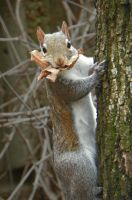 Mouthful of leaves by DingoDogPhotography
