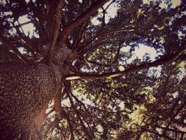 tree 2 by lalliphotography
