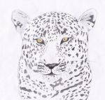 Leopard 2 by HGManiac15