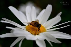 bee :) by misike22