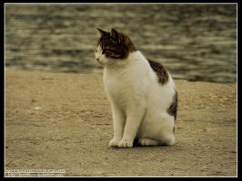 Cat by MWPHOTO