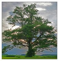 Tree at dusk.800 0547, with story by harrietsfriend
