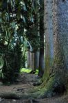 narrow pass by Wilithin