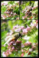 Bee Sequence ... by Miarath