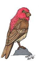 DABD House Finch by TornFeathers