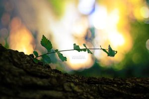 New Life by LorenzoDiFolco