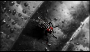 Red Eyes by TJShots