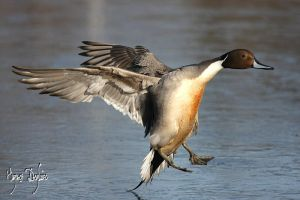 Ice Landing by Robin-Hugh