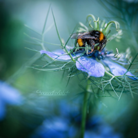 Busy Bumblebee. by OliviaMichalski