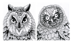 Owl portraits by Creative-Caro