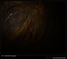 Eye in Eye with the Giants I by Mordredh