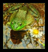 Frogger by pril