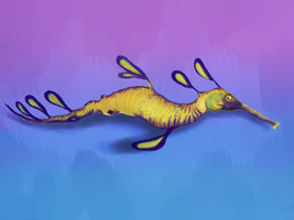 Weedy Sea Dragon by AnnaNM