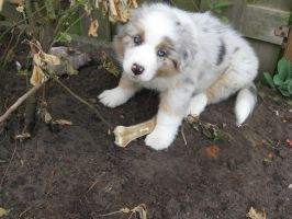 puppy by lindaatje