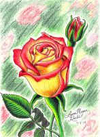 Pink and Yellow Rose by claidis