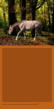 Gray Horse Autum Forest by LiveLoveLax21