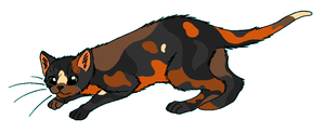 ShadowClan - Fernshade by WildpathOfShadowClan