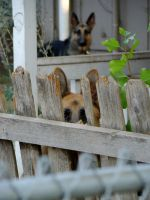 Dogs by Cal-Erstein