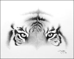 Tiger by koolflamebabe
