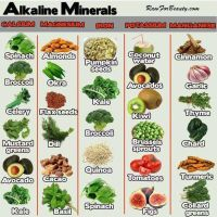 Vegan Sources Of Nutrients 020 by veganshareStock