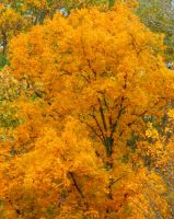 Shades of Autumn 2014.XI by MadGardens