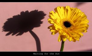 Waiting for the Sun I by Gogha