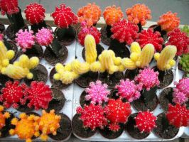 Colorful Cacti by icelandknight