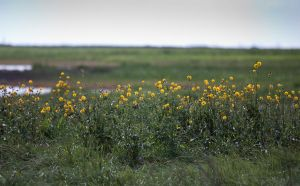 Yellow Flowers Green Grass by Lukasio