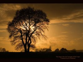 Sussex Tree by GMCPhotographics