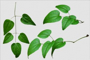 Leaves png by gd08