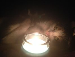Light a candle for orphan pets by RakshaWw