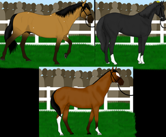 [ENTRY] Stallion Parade at PPS by King-Icarus
