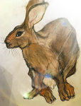 Hare 7 by whydoyoucaresomuch