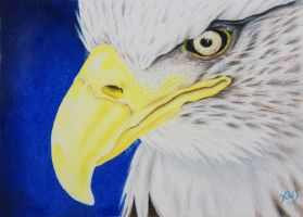Eagle Eye by KW-Scott