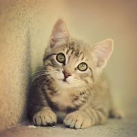 The Cat by marinsuslic