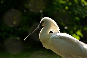 Spoonbill by The-Other-Half-Of-Me