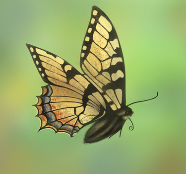 Daily Doodle #8 - Butterfly by Meg-07