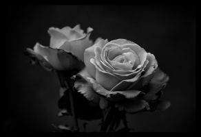 Black'n'white roses by Sloorth