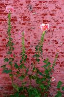 Flowers and a wall by PeterTBexley