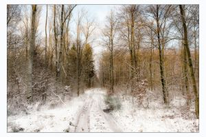 A Winter Day by AndersStangl