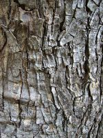 Woody Texture III by KW-stock