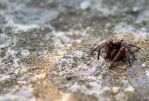 Jumping Spider by N-ScapePhotography