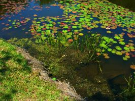 Lilies in the Water by jesus-at-art