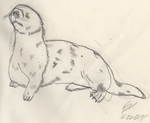 Sea Otter by clearshot01